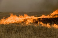 Cattle operation losses from wildfires exceed $26 million