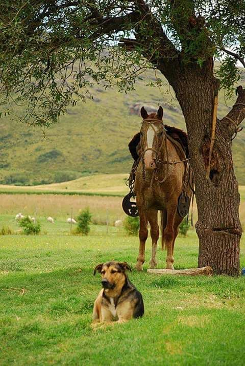 Farm dogs and horses may qualify for certain tax deductions