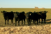 More exports and fewer imports supporting U.S. beef markets