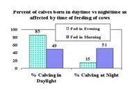 Nighttime versus daytime feeding influences time of calving