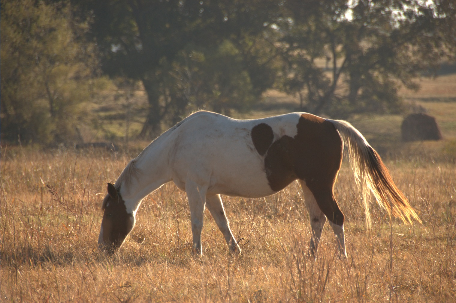 Nutrition a key component to managing growing horses