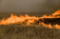 Oklahoma cattle producers ravaged by March 7 wildfires given permission to use CRP lands