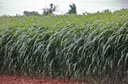 Oklahoma Crops Conference set for four locations in July