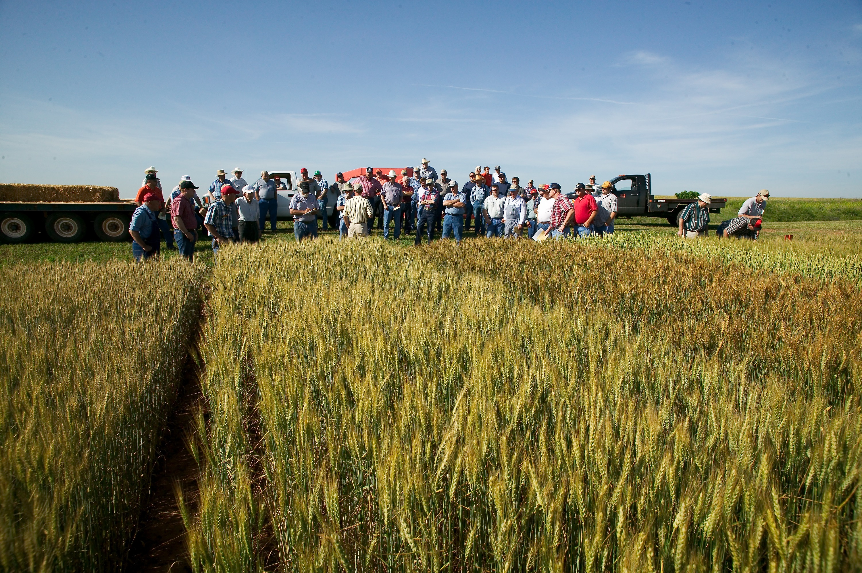 OSU Wheat Field Day set for May 12 in Lahoma