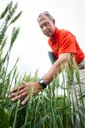 OSU wheat geneticist Brett Carver honored by National Association of Plant Breeders