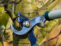 Plant disease control possible through tree pruning