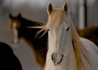 Providing for the nutritional needs of older horses may require management changes