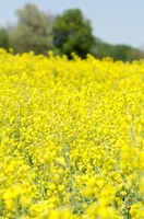Service providers should register now to attend the July 25 Canola 101 Workshop