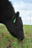 Understanding the effects of global beef trade on the U.S. beef industry