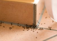 Keeping ants out of the house