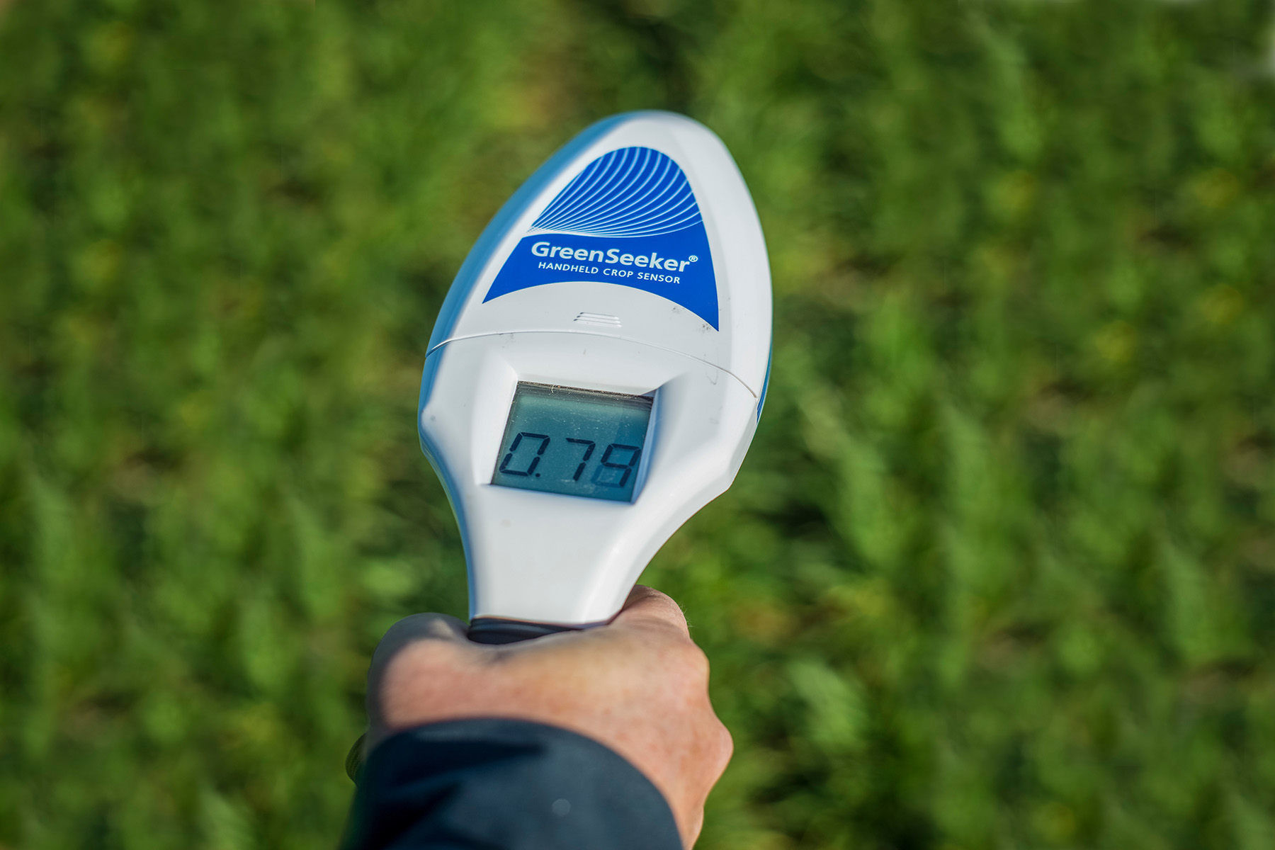Wheat producers facing tough call on nitrogen application