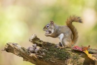 Wildlife goes nuts for acorns