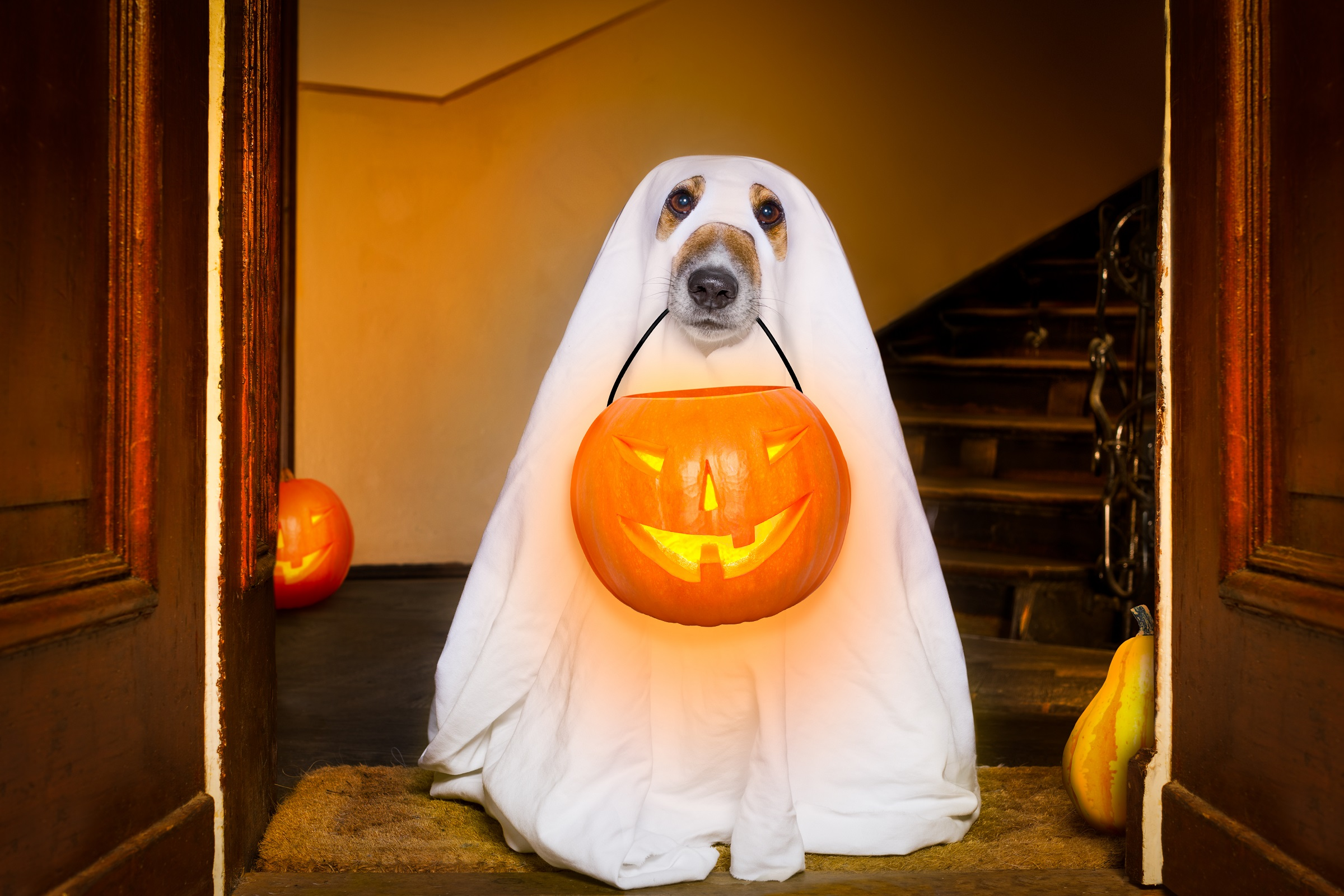 Concerns for your pet during Halloween