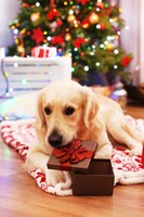 Healthy holiday gifts for your pet