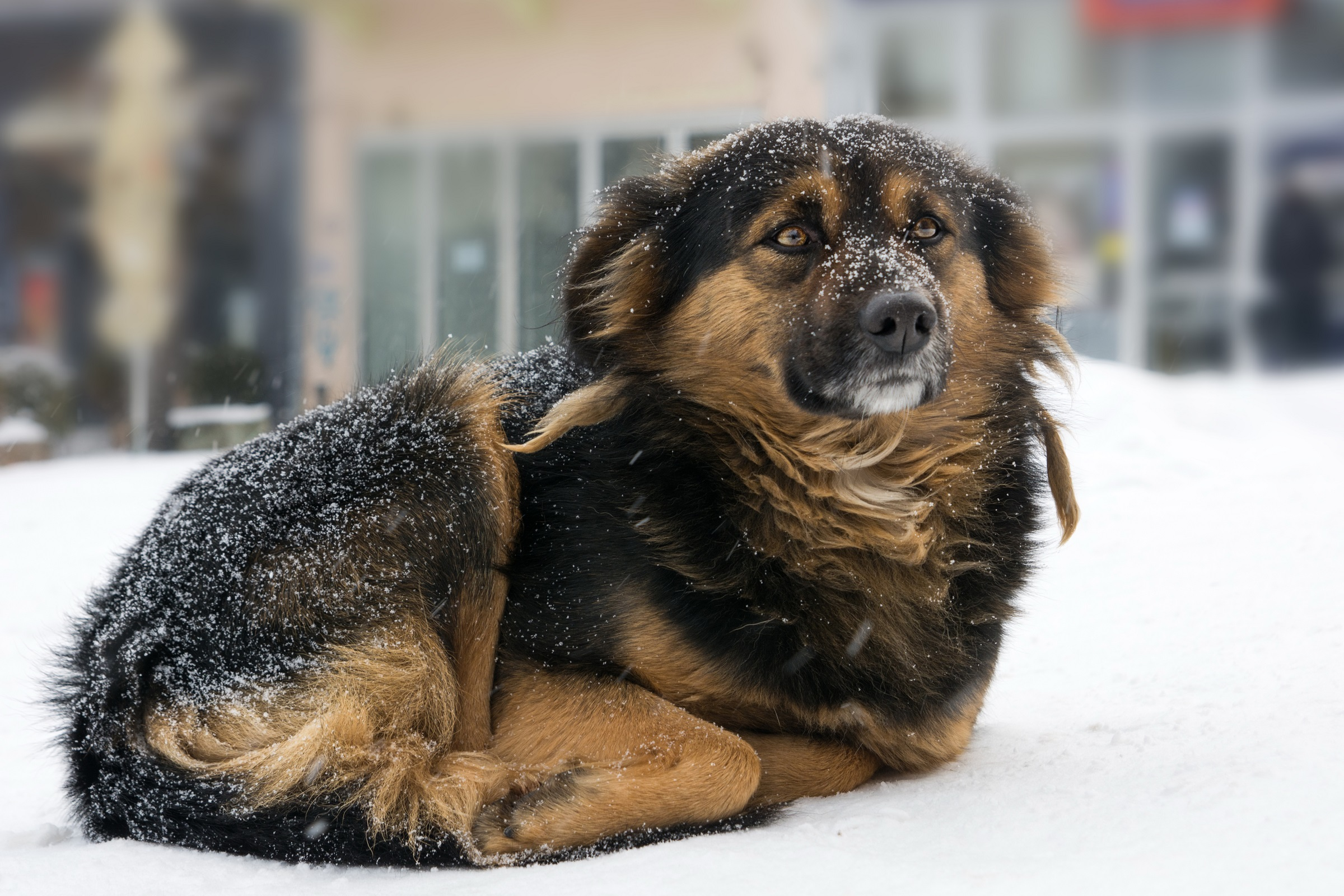 Keep your pets safe during winter weather