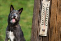 Keep your pets safe from heat stress/stroke this summer