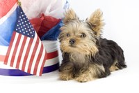 Pet safety is important during July 4 holiday