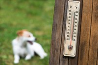 Protect your pet from summer heat