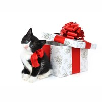 Think twice before giving a pet as a holiday gift