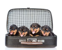 Tips for traveling with your pets over the holidays