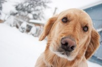 Pets need shelter from the winter weather