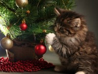 Tips to keep pets safe during the holidays