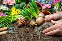 Plant now for spring-flowering bulbs