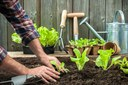 Tips to help avoid gardening injuries