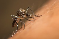 All the buzz about mosquitoes