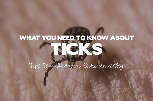 PestManagement_LandingGraphics_Ticks.png